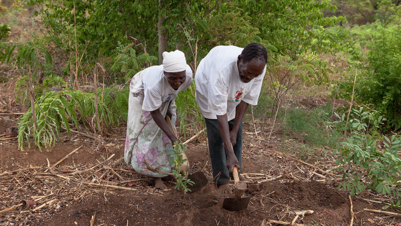 Winesi och hans fru arbetar på fälten vid deras hem.
