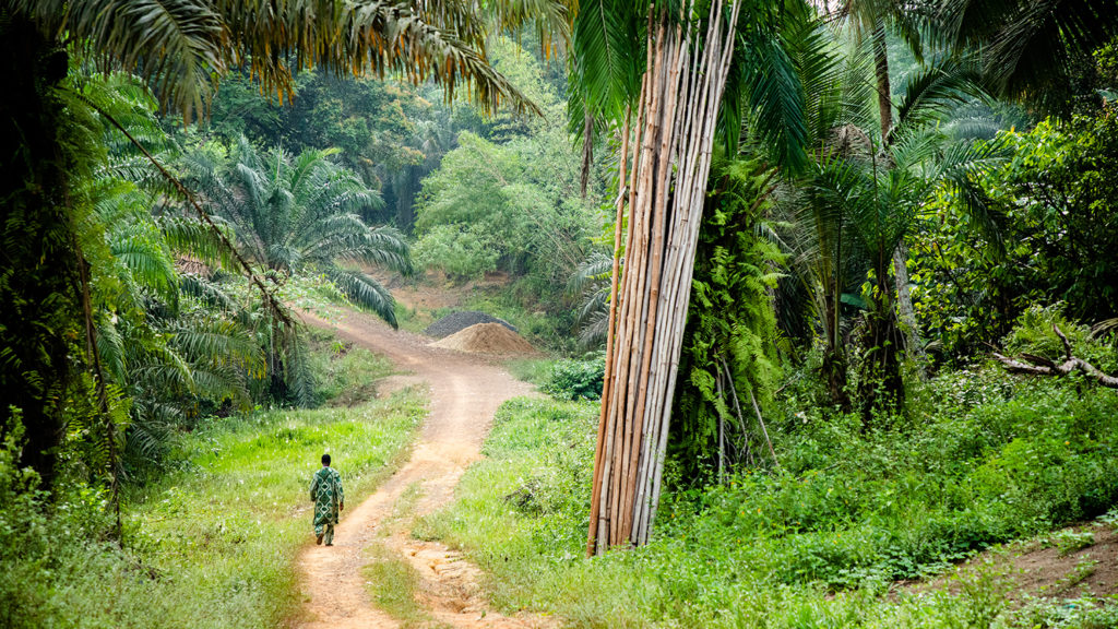 En avlägsen grusväg i riktning mot Gorzohn omgiven av frodig växtlighet och höga träd.
